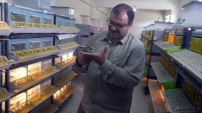 KKKA hastalığıyla mücadele için 12 bin keklik doğaya bırakılacak
