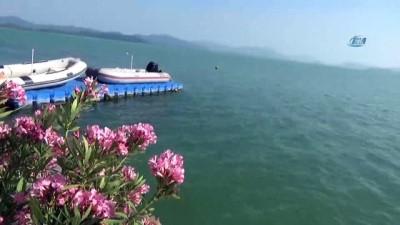 Nadir ayaklı göllerden olan Köyceğiz Gölü havaların ısınmasıyla turkuaz rengine dönüştü