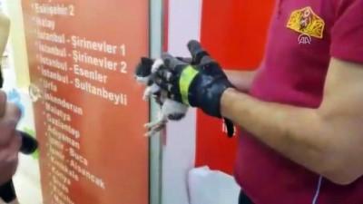Duvar arasına sıkışan kedi yavrusu itfaiye ekiplerince kurtarıldı - ADIYAMAN
