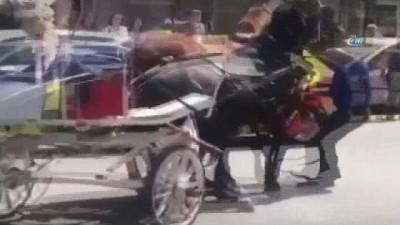 Faytona koşturulan at, aşırı sıcaktan yere yığıldı...Vatandaşlar tepki gösterdi