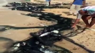 - Mocono Kasırgası, Yemen Sahillerini Balıkla Doldurdu