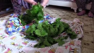Üzüm yaprağı üreticinin yüzünü güldürüyor - HATAY