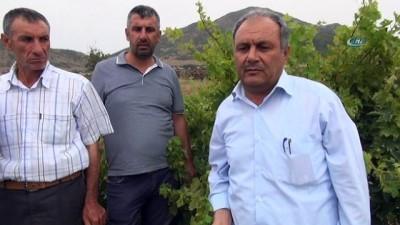 Gaziantep'te de üzüm bağları yok oluyor