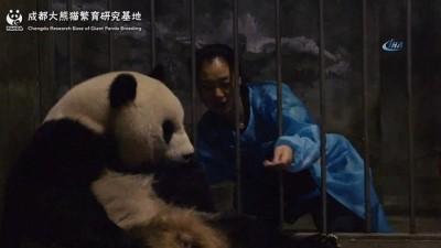 - 2018'in ilk ikiz pandaları Çin'de doğdu