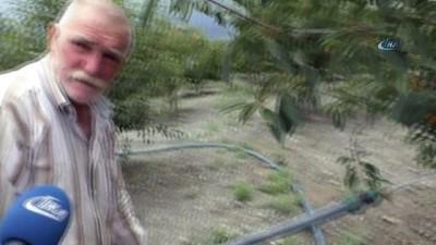 Kiraz bahçesini güneş enerjisi sistemi ile suluyor