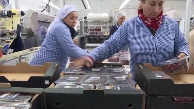 Yaş meyve sebze ihracatına Rusya dopingi - BURSA