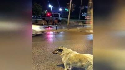 Köpekten kırmızı ışık dersi