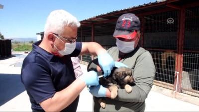 Hayvan barınağında sokak hayvanlarına itaat eğitimi - OSMANİYE