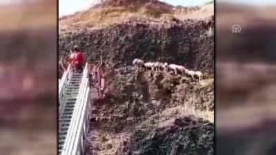 salda - Yamaçta mahsur kalan koyunlar kurtarıldı - ADANA