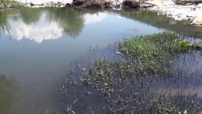 Toplu balık ölümleri - MUĞLA