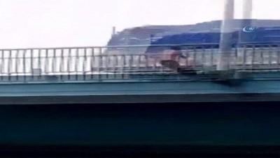 Dünyaca ünlü ırmağın köprüsünde önce barfiks sonra tehlikeli atlayış