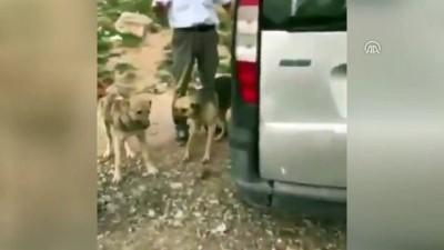 Aracıyla köpeği ezen sürücü gözaltına alındı - ANKARA