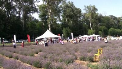 destina - Lavanta tarlası Edirne'nin tanıtımına katkı sağladı - EDİRNE
