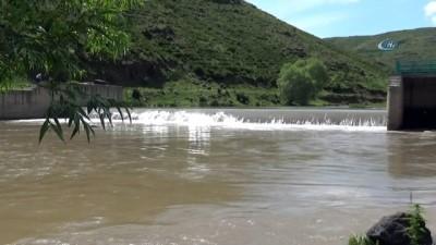 Kars'ta tatlı su kefallerinin ölüm göçü başladı