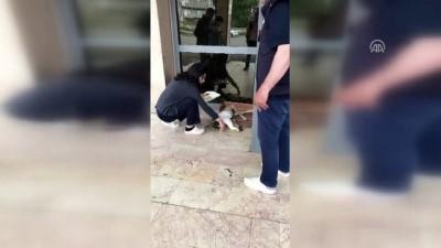 Yaralı köpek hastaneye polis aracıyla yetiştirildi - KARS
