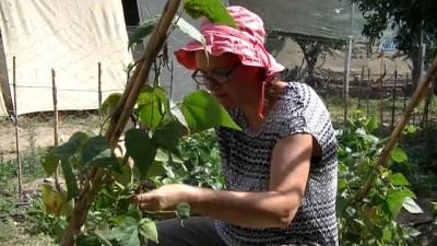 Hollandalı Diane, Türkiye'de organik tarım yapıyor