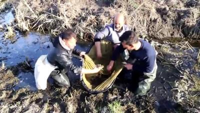 Belgeli 'kurbağa avcıları' işbaşında - EDİRNE