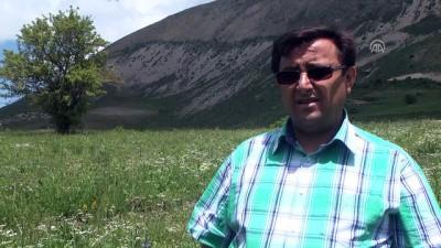 Kop Dağı Müdaafası Tarihi Milli Parkı'nda çalışmalar başladı - BAYBURT