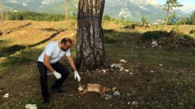 Nesli tükenme tehlikesinde olan Karakulak ölü olarak bulundu