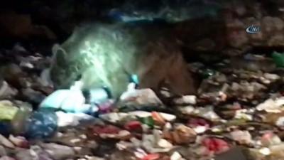 Sarıkamış'ta ayılara bayram şekeri