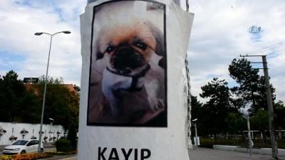Bu köpeği bulana ödül
