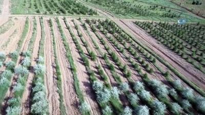 Atatürk Orman Çiftliği'ne 2,1 milyon adet fidan dikildi...Atatürk Orman Çiftliği havadan görüntülendi
