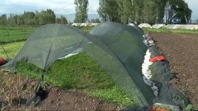 Erzurum'da dolu yağışı seraları vurdu