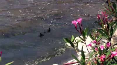 Bafa Gölü'nde su kalitesi en kötü sınıfta - MUĞLA