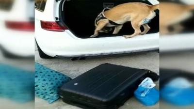 Dedektör köpek yedek tekerden ayrılmayınca her şey ortaya çıktı