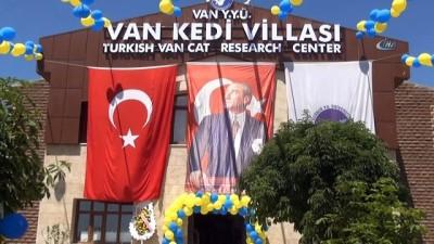 Türkiye'nin ilk kedi havuzu Van'da açıldı