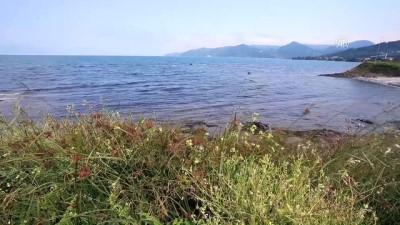 Karadeniz'in turizmde parlayan yıldızı 'Yason Burnu' - ORDU