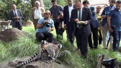 Bursa Hayvanat Bahçesi'nin yeni misafirleri gergedanlar