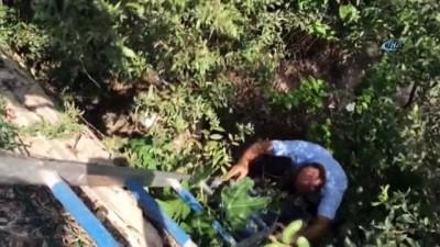 Irmakta mahsur kalan yavru köpeği itfaiye kurtardı