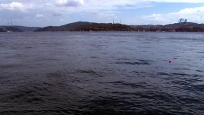 Yunus balıkları İstanbul Boğazı'nda avlandı