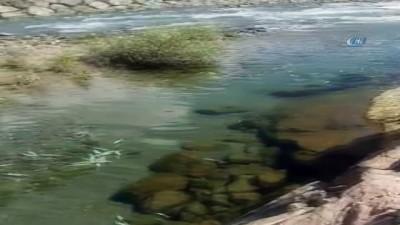 Baraj kapakları kapatılınca çok sayıda balık telef oldu