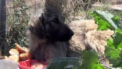 Trenin çarptığı köpek barınağa teslim edildi - NİĞDE