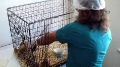 Yavru Kukumav kuşları tedavi altına alındı