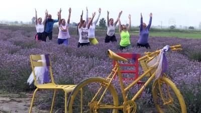 Lavanta tarlasında yoga yaptılar - EDİRNE