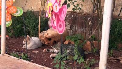 Suriye'de sahipsiz kedilerin babası oldu (2) - İDLİB