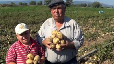 - Sandıklı'da yeni mahsul patates hasadı başladı