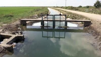 sulama kanali - Sulama kanalında ceset bulundu - ADANA