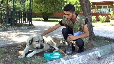 Kavurucu sıcaklarda hayvanların imdadına ekipler yetişti