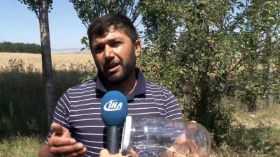 'Sarı Kız' köylüleri tedirgin etmeye devam ediyor