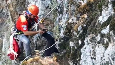 Kayalıklarda mahsur kalan oğlak kurtarıldı - MUĞLA