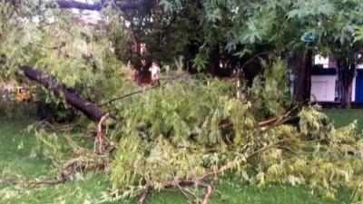 Erzincan'da fırtına ve yağış ağaçları devirdi