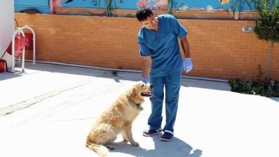 Otomobilin tamponuna bağlanan köpeğe belediye sahip çıktı