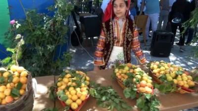 Kahramanmaraş'ta kayısı tarla günü