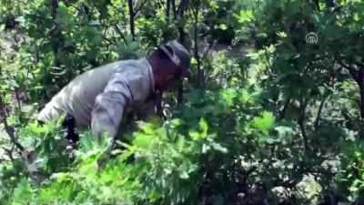 jandarma - Kayıp minik Evrim'i 'kurtlar' arıyor - TOKAT