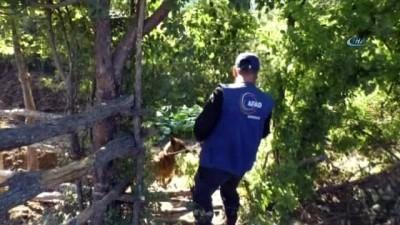 Evrim'i kadavra köpeği Mavi, mezarlıkta aradı