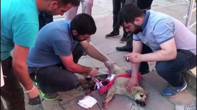 Yaralı yavru köpeğe vatandaşlar sahip çıktı - KARS